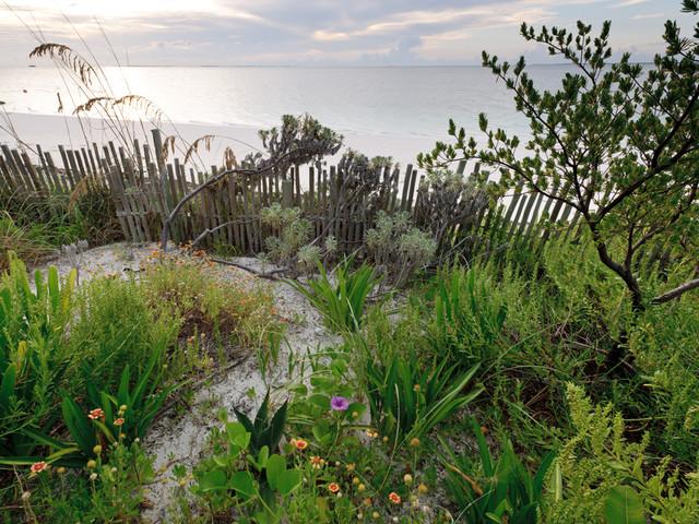 Davids Garden tropical-landscape