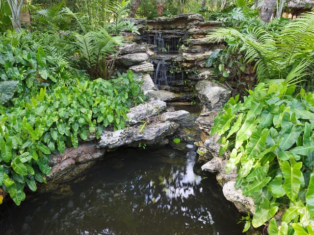 Davids Garden tropical landscape