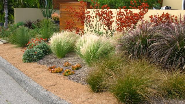 debora carl landscape design - Contemporary - Landscape - san diego ...