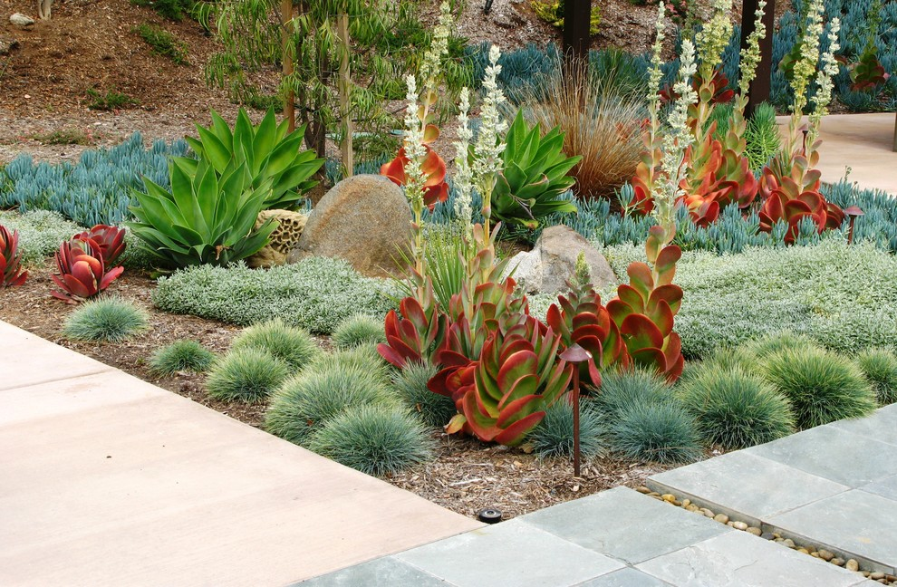 Inspiration for a contemporary drought-tolerant backyard landscaping in San Diego.