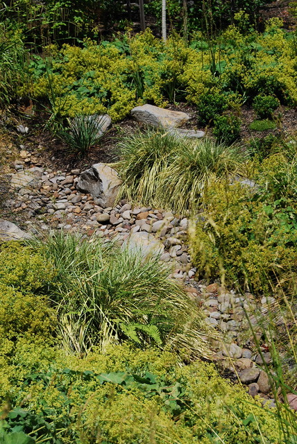 Decorative Yard Drainage : Decorative stormwater swale contemporary landscape