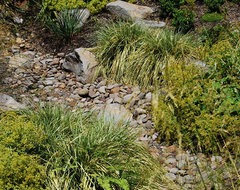 decorative stormwater swale contemporary landscape