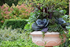 12 Easy-Care All-Foliage Container Gardens for Fall