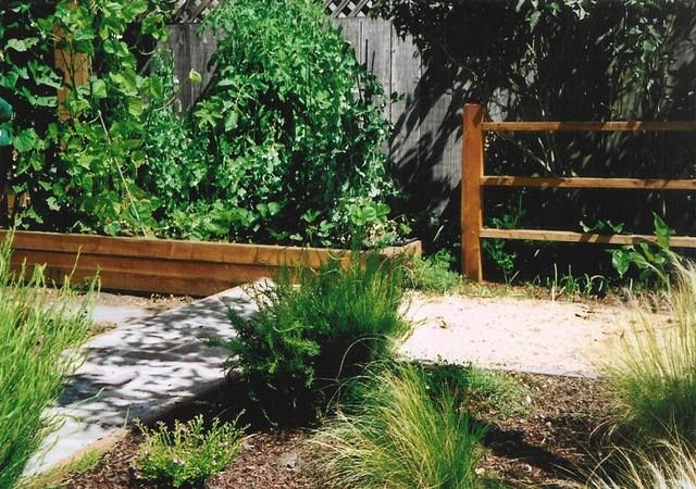 Dog Friendly Backyard Ground Cover : Dog Friendly Garden  Traditional  Landscape  san francisco  by