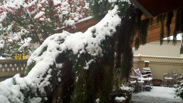 Dragon Tree Climbs Garden Pergola eclectic-landscape