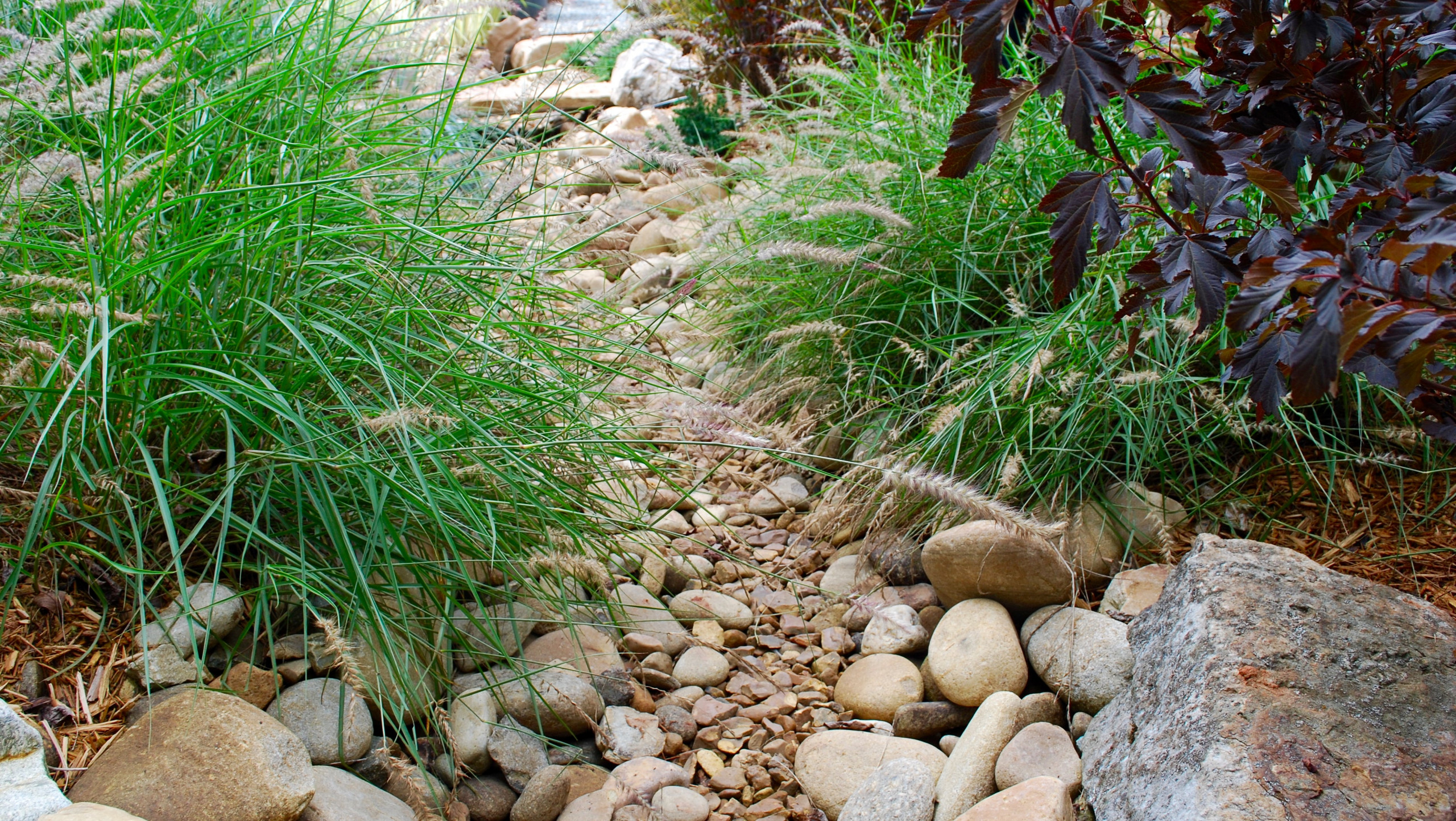 Drainage ditch-turned-meadow garden