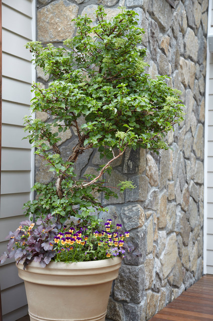 Dream Home Container Plantings - Armonk, NY eclectic landscape