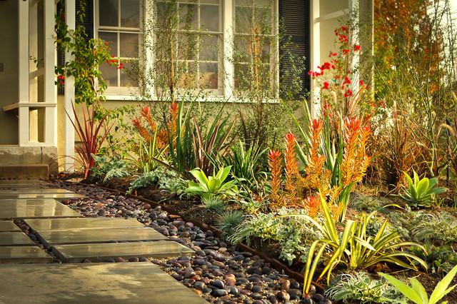 drought tolerant and eclectic front yard  contemporary - contemporary - landscape