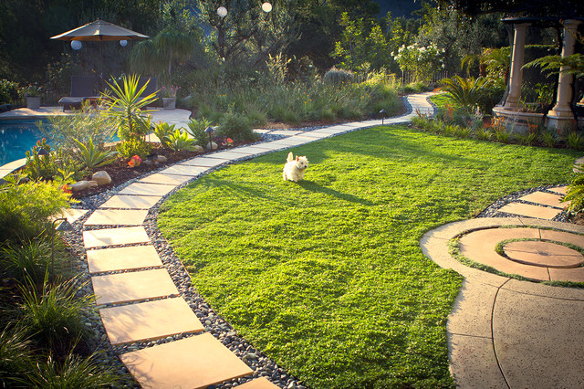 Drought Tolerant, Dog Friendly Ground Cover- Back Yard ...