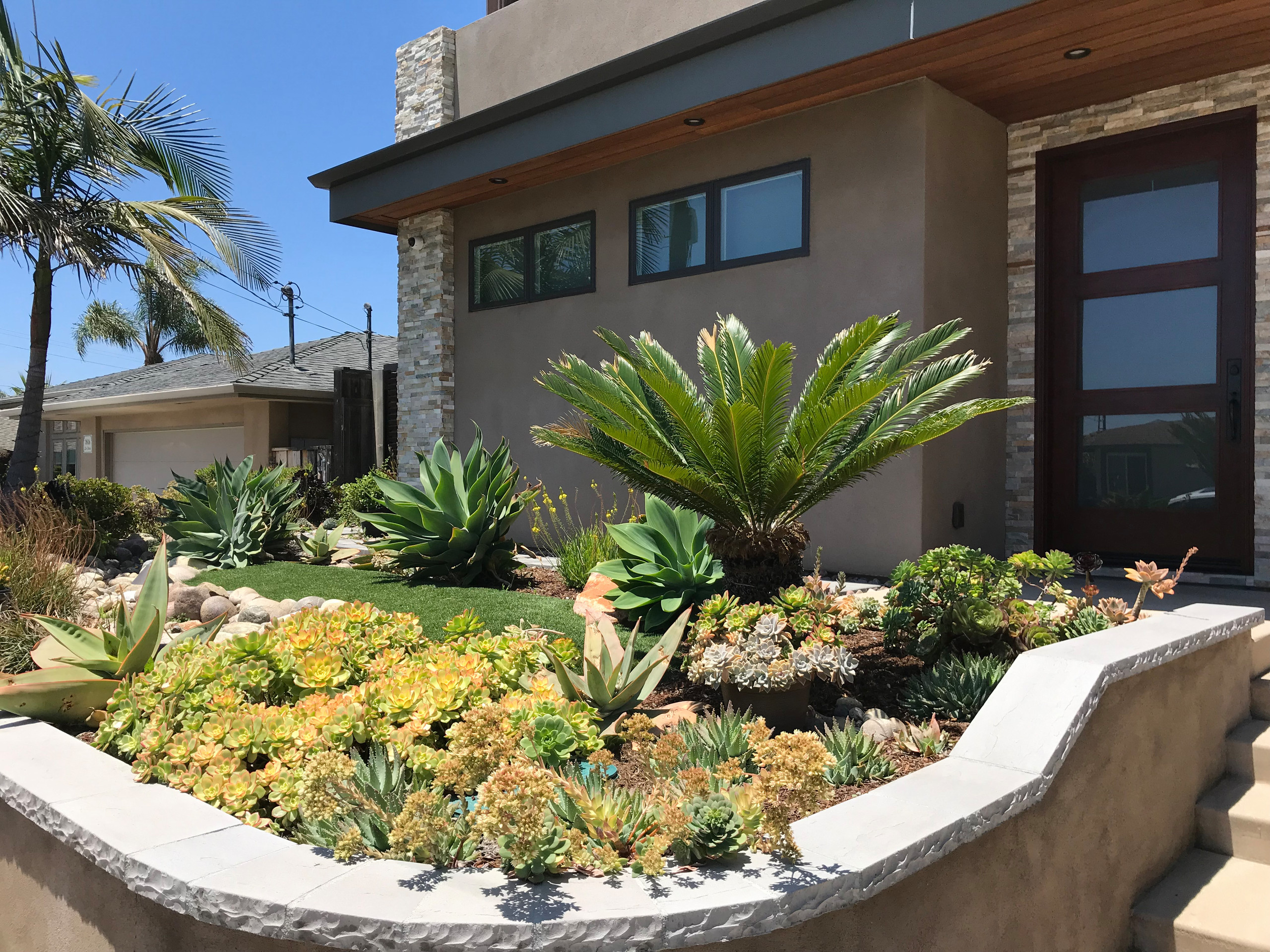Drought Tolerant Front Yard Planting
