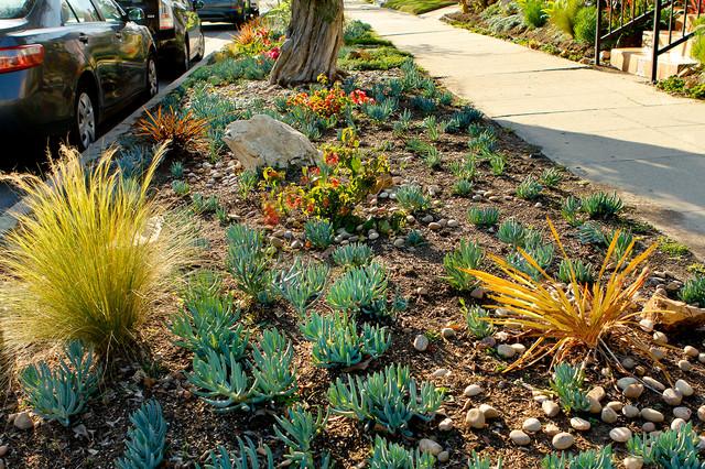 Drought Tolerant Garden Curb Garden Contemporary