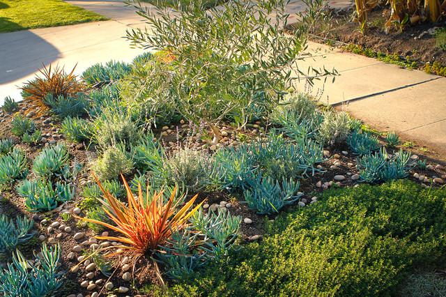 Drought Tolerant Garden Garden View Contemporary