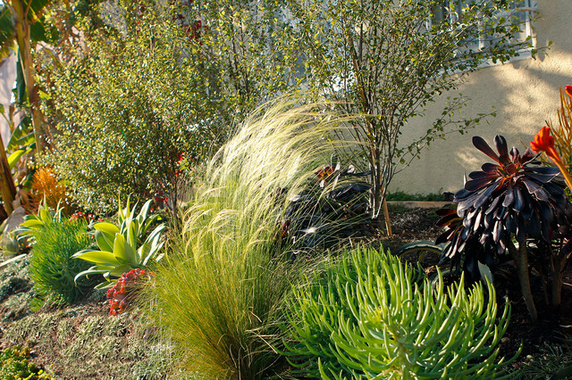 Drought Tolerant Garden Mixing Texture Playing with the