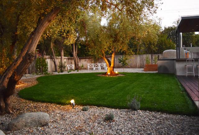 Drought Tolerant Landscape Mature Olive Trees Modern