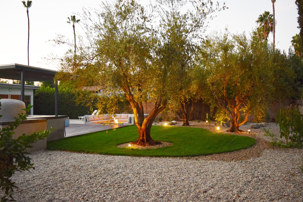 Drought Tolerant Landscape And Mature Olive Trees Modern