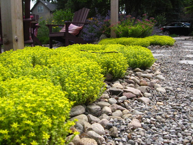 Drought Tolerant Plants Traditional Landscape Other