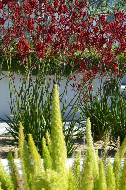 Drought tolerant plants eclectic landscape los for Drought tolerant trees