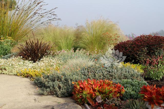 Dry Garden Palos Verdes CA Contemporary Garden Los