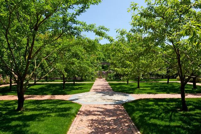 Dwarf Fruit Tree Orchard Traditional Landscape New