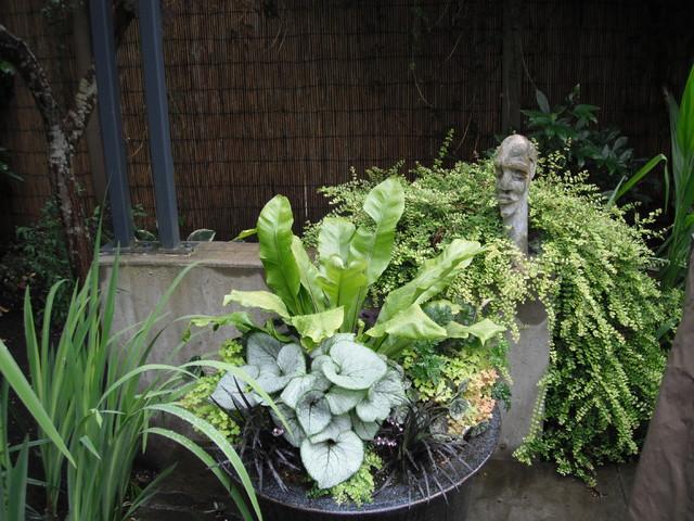 Eclectic Foliage Containers eclectic-landscape