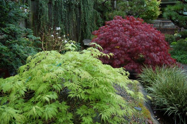eclectic garden eclectic-landscape