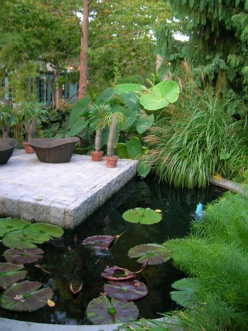 Pond eclectic landscape