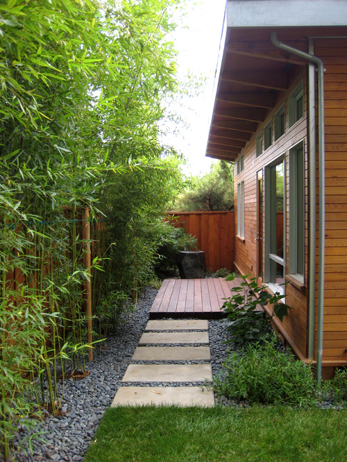 Bamboo Landscaping Guide: Design + Ideas