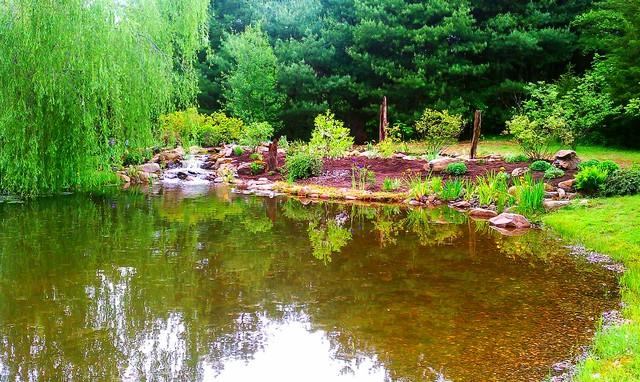 Ecosystem Pond Eclectic Landscape