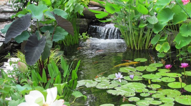 Ecosystem ponds by premier ponds burtonsville maryland for Garden pool ecosystem