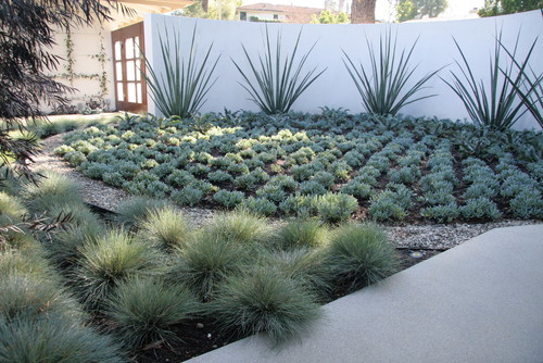 I also would love to know the spiky plants by wall and the for Modern grasses landscaping