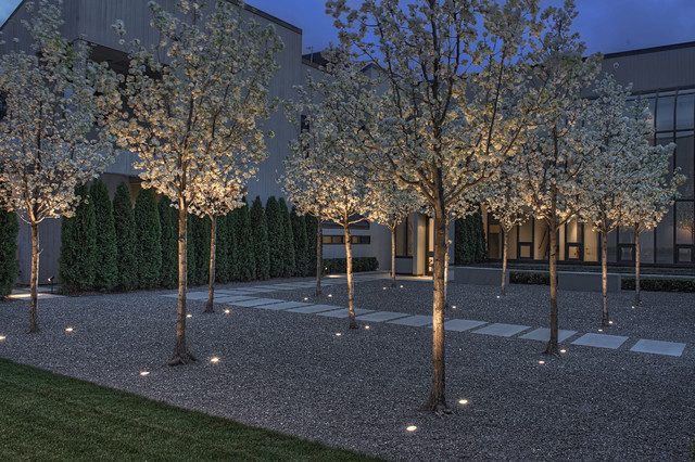 Landscaping With Pear Trees : Entry courtyard at night contemporary landscape san