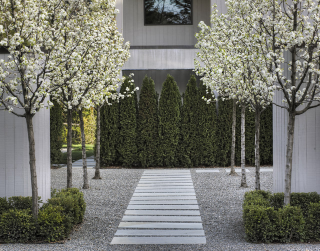 Entry Courtyard contemporary-landscape