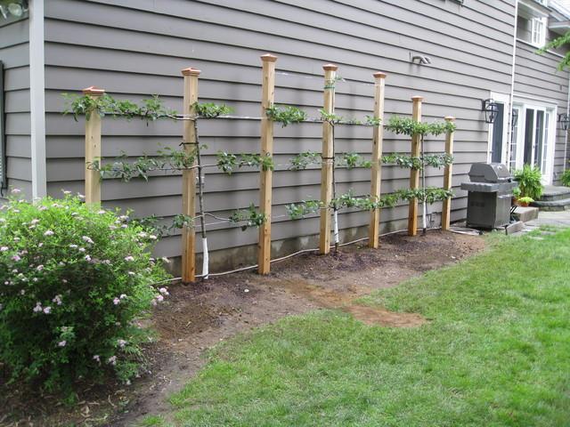 Splinternye Espalier Fruit Tree Structure - Klassisk - Have - New York - af RM-18