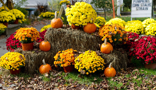 Fall Landscaping Ideas the best flowers to plant this fall