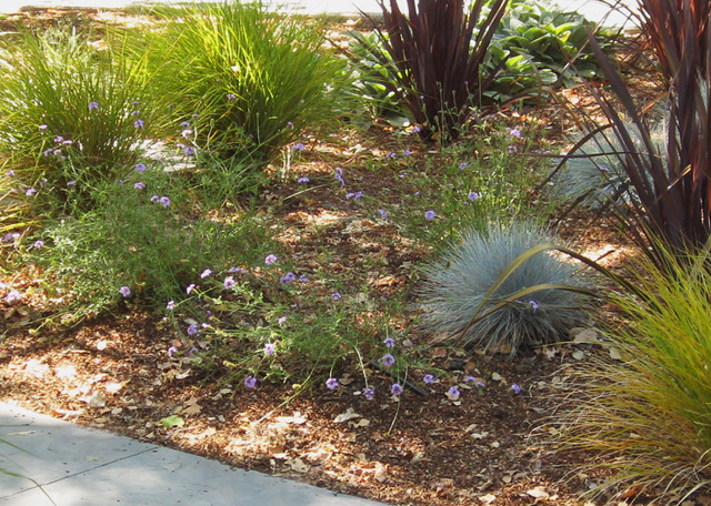 Favorite california native plants i design with in no ca for California native landscape design
