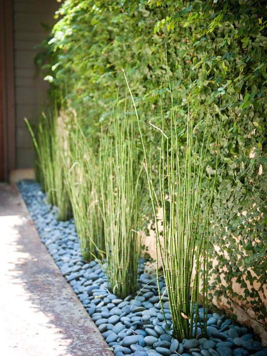 Horsetail Reed Home Design Ideas Pictures Remodel and Decor