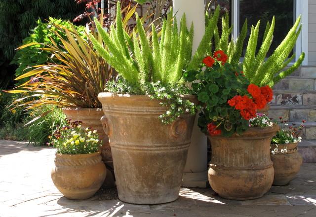 Flowering Pots Contemporary Landscape San Francisco