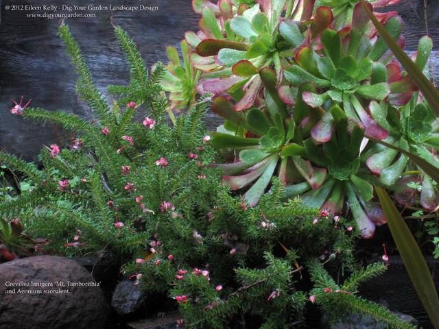 Flowers & Foliage Textures Up Close - San Anselmo, CA garden. contemporary-landscape