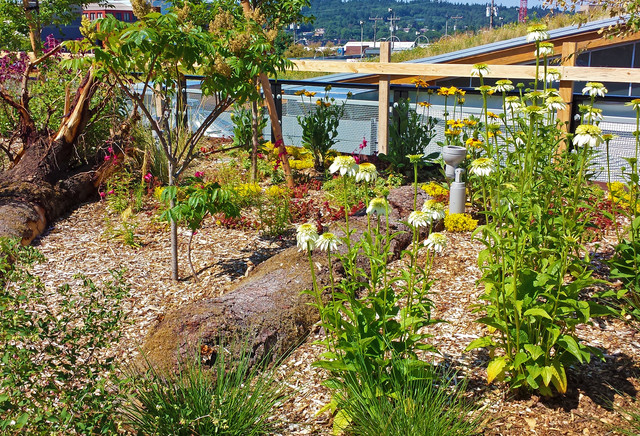 Flowers and logs in green roof garden contemporary-landscape