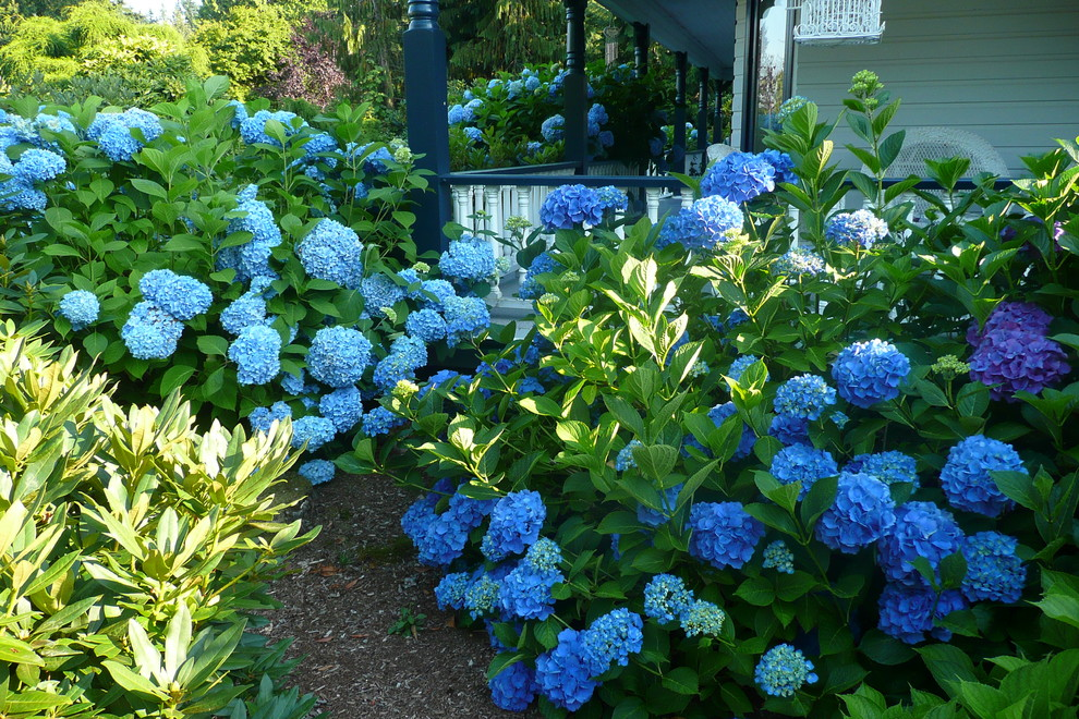 Design ideas for a traditional front yard landscaping in Vancouver.