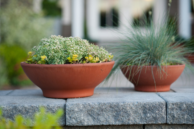 Front Entry Courtyard & Planters modern-landscape