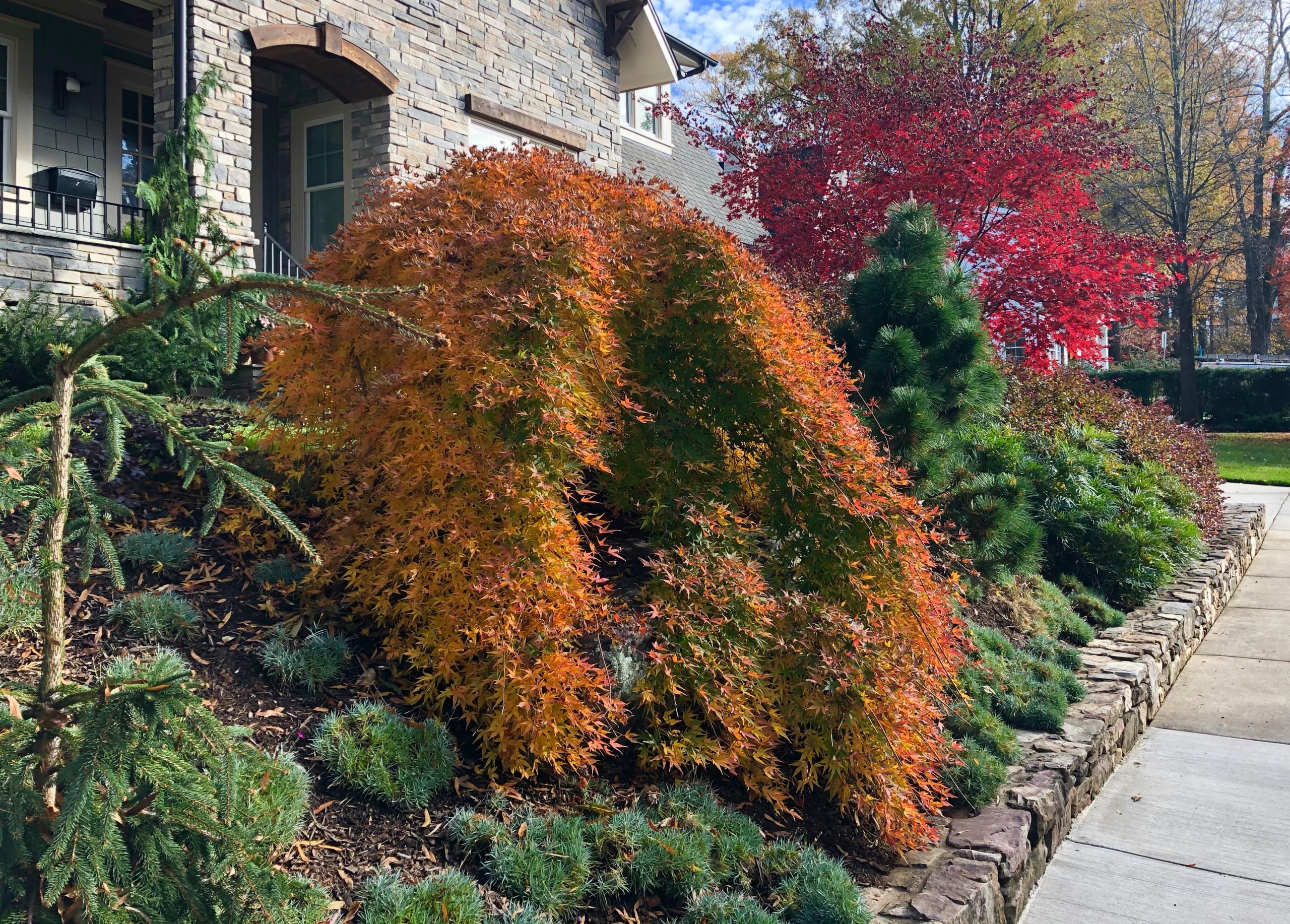 Front garden in November