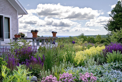 Two Acres Of Low Maintenance Landscape In Penobscot Maine Homes