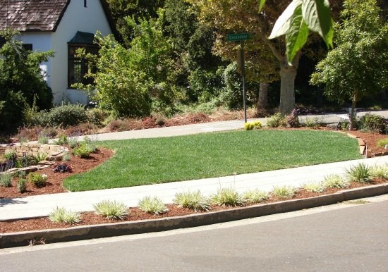 Front Yard Garden with Swath of Verdant Lawn traditional-landscape