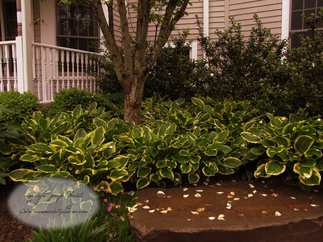 front yard hosta bed planting - traditional - landscape - new york  joe weuste