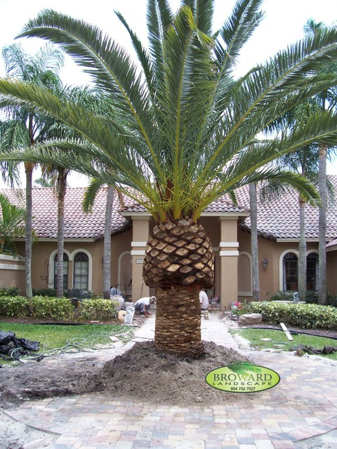 Front Yard Landscape Tropical Landscape Miami By