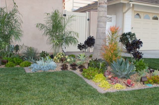 front yard succulents