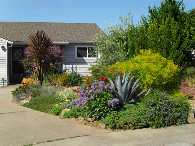 Drought tolerant low water use front yard for Drought tolerant yard