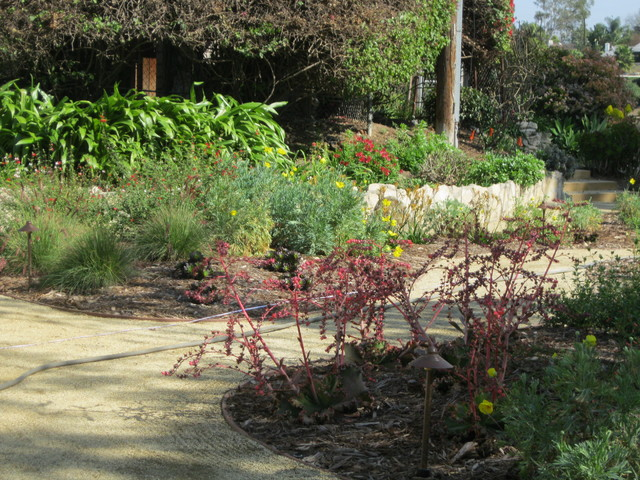 California native drought tolerant front yard