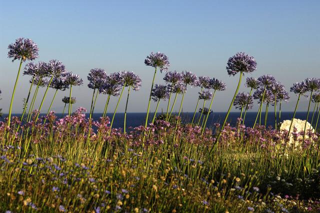 Garden design in Greece on the island of Paros mediterranean-exterior
